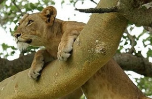 queen-elizabeth-national-park-uganda