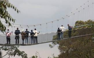 Rwanda canopy walk