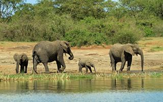 elephantsinafrica