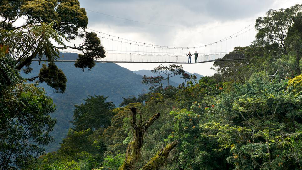 rwanda-nyungwe-canopy-walk