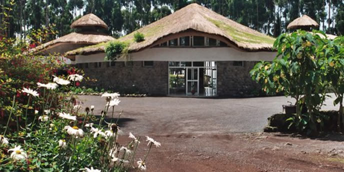 gorilla-nest-lodge-hotel-access
