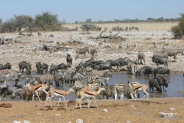 Game safari in Etosha National Park