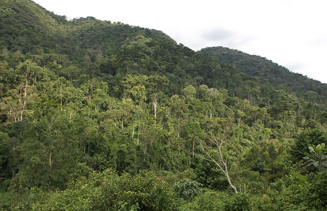 View of Bwindi Impenetrable Forest
