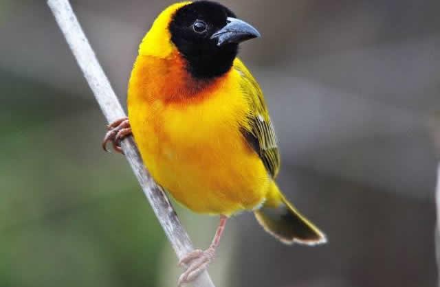 Akagera: Birders' Paradise in Rwanda