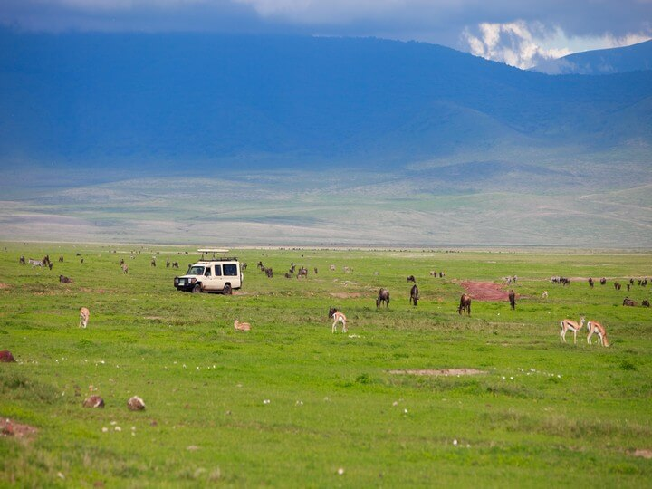 Game Drive through Ngorongoro Conservation area (Natural Zoo)
