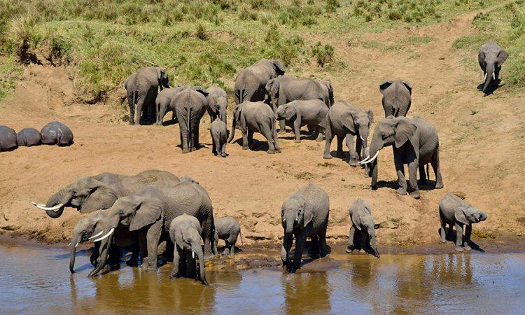 Elephants in Tarangire National Park Tanzania